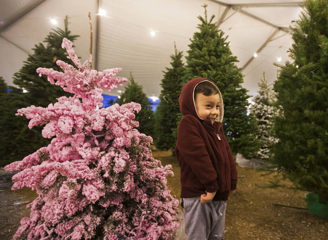 Jacob Koapaka, 3, stands in a row of Christmas trees on Wednesday, Dec. 11, 2019, at 510 South ...