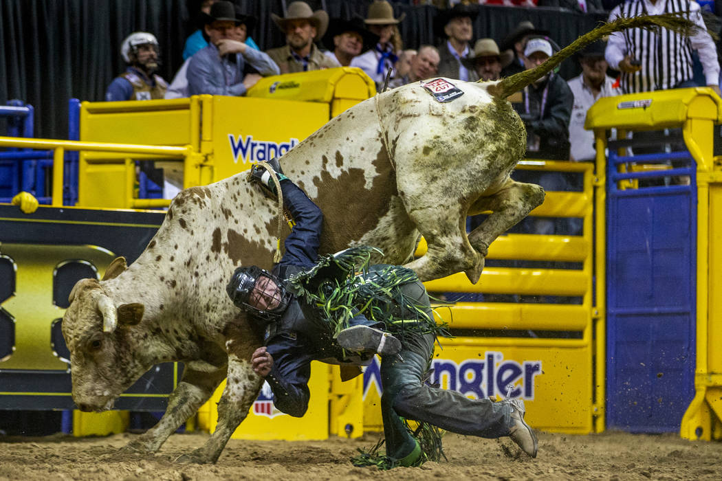 Jordan Hansen Ponoka, Alberta, is dragged while still strapped to Velocity during Bull Riding i ...
