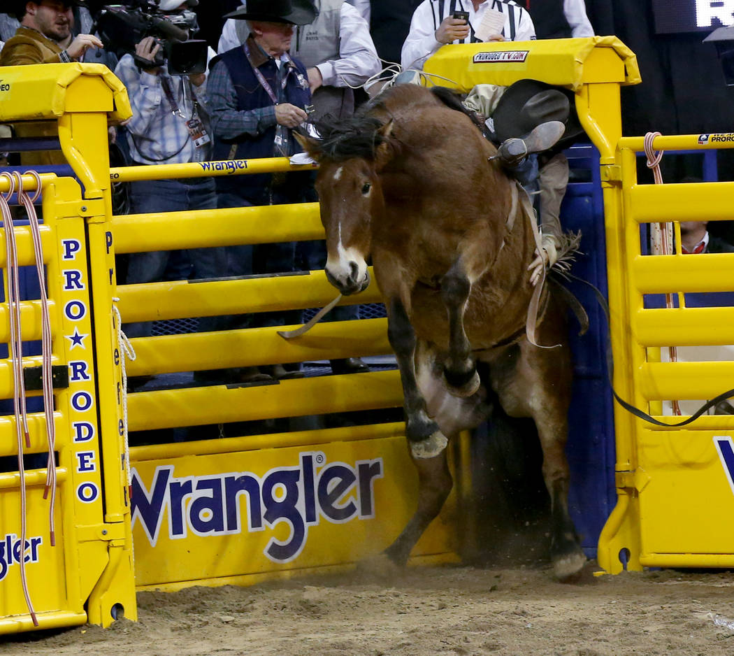 Orin Larsen of Canada gets slammed into the chute by Pip Squeak in Bareback Riding during the n ...
