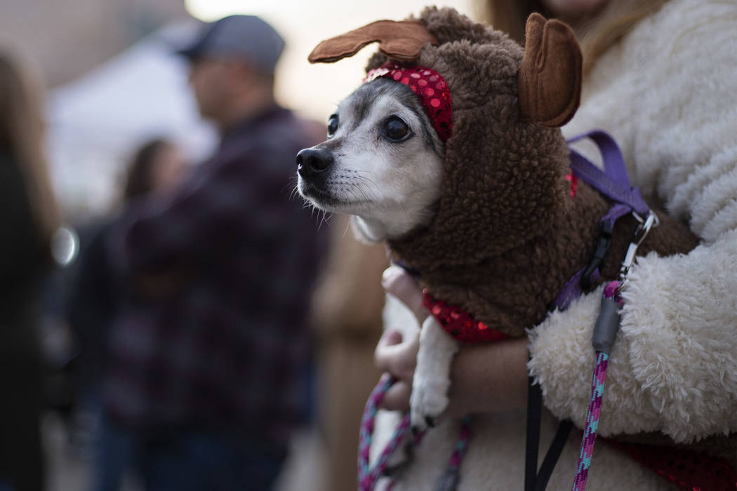 Sally Romero of Henderson holds her 15-year-old dog Lolita at Henderson's annual WinterFest on ...