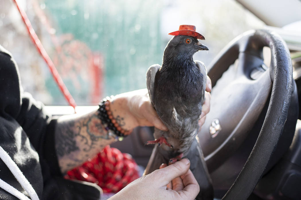 """Mariah Hillman of Lofty Hopes pigeon rescue holds """"Billie the Pidge"""" on Tuesday, Dec. ..."""