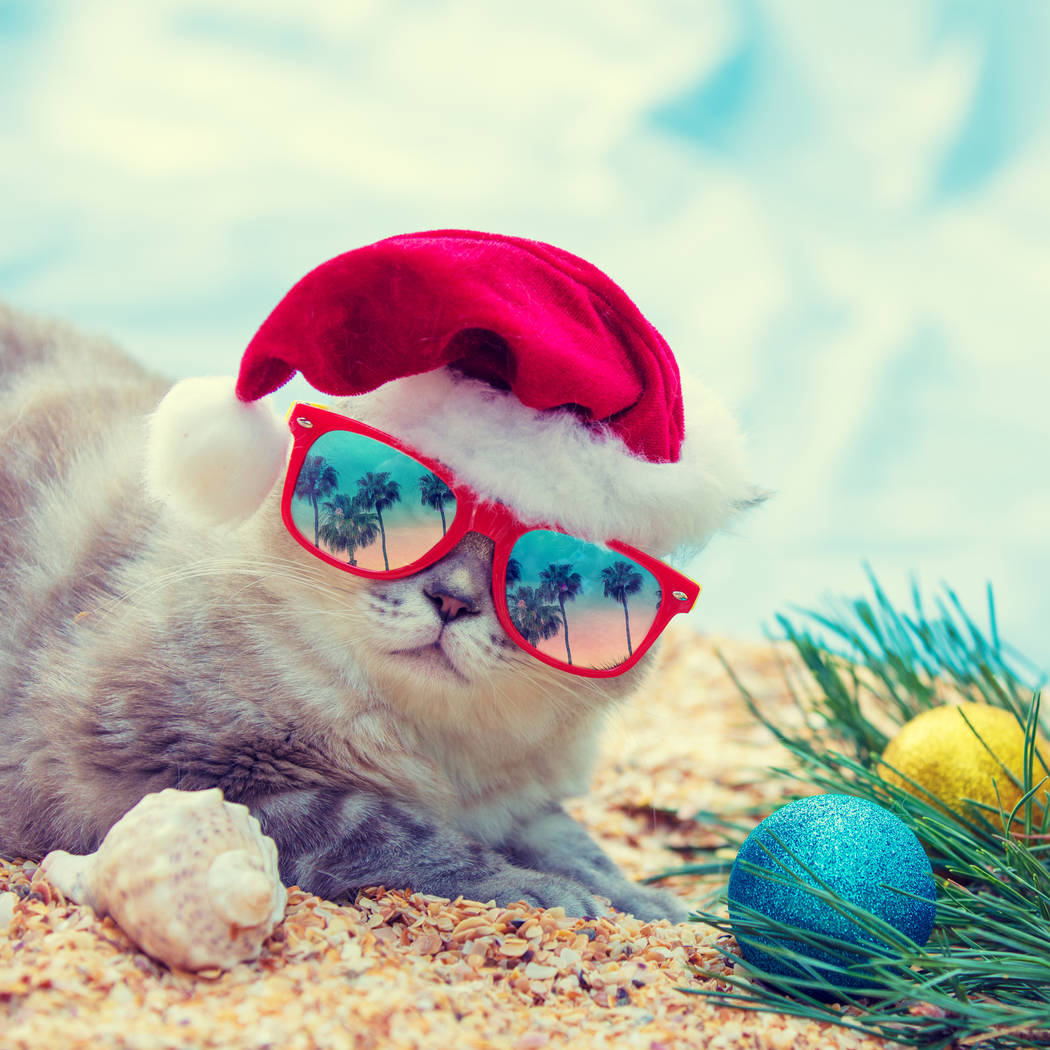 Cat wearing sunglasses with the reflection of palm trees relaxing on the beach. Cat wearing San ...