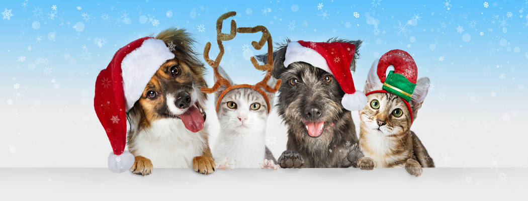 Cute Christmas dogs and cats together hanging paws over white horizontal website banner or soci ...