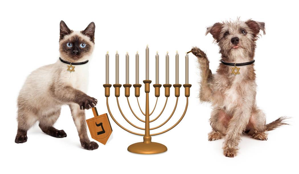Cute puppy dog lighting a menorah candelabrum and a kitten spinning a wooden dreidel in celebra ...