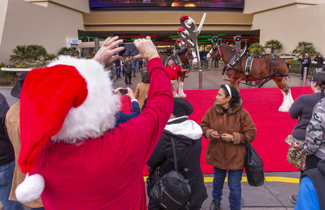 The world-famous Budweiser Clydesdales make an appearance at The Strat to the delight of many a ...
