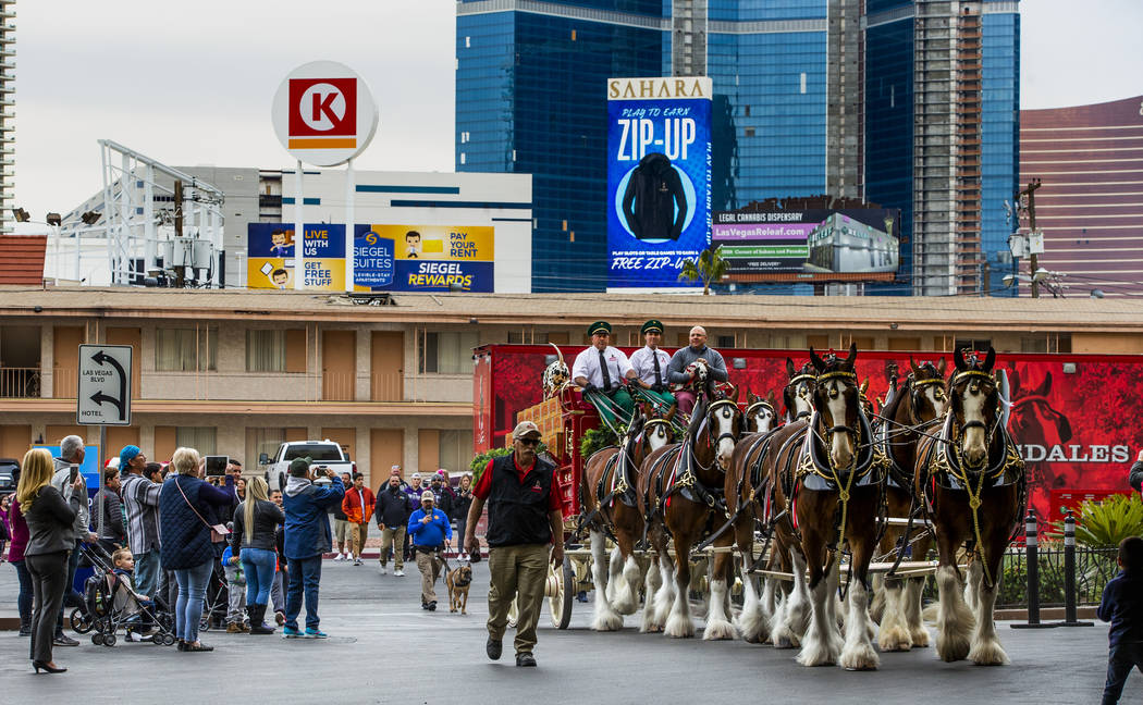 The world-famous Budweiser Clydesdales pulling the Budweiser red beer wagon pull up to the port ...