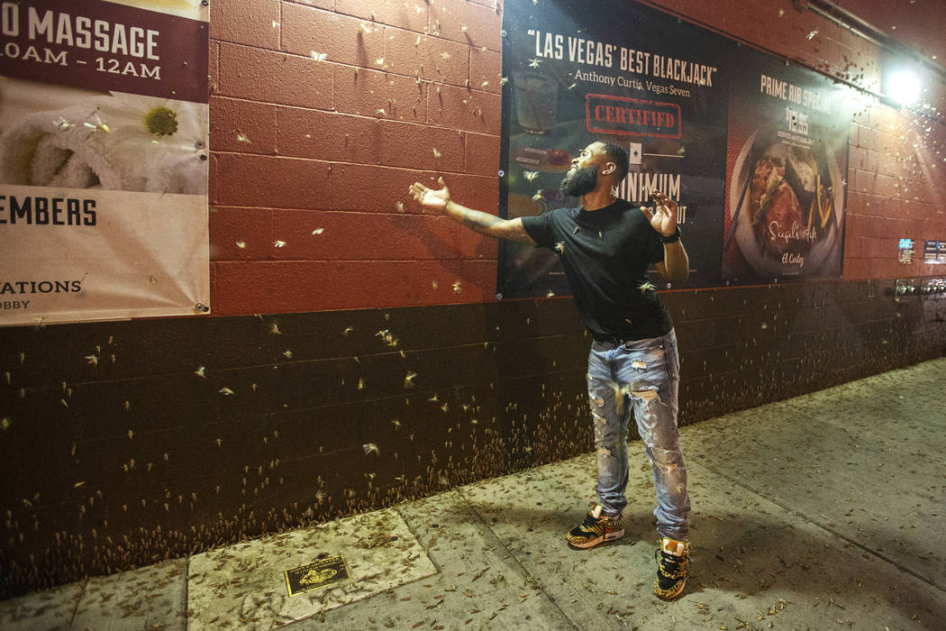 Dorian Williams, from Houston, checks out the grasshoppers outside the El Cortez on Sunday, Jul ...