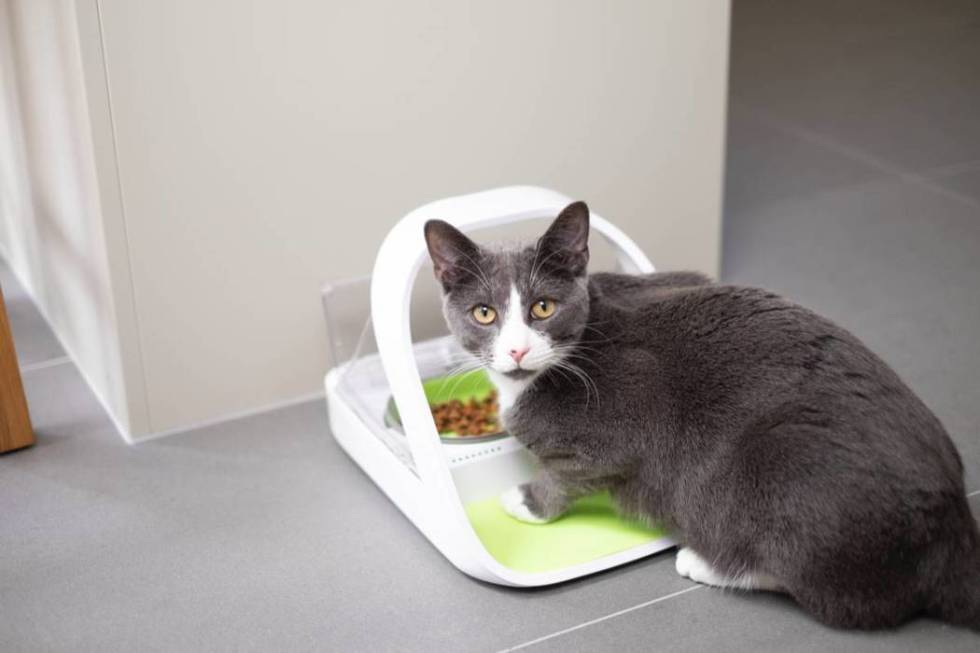 "Sure Petcare's ""Micochip Pet Feeder Connect,"" set to be displayed at CES, records how much ..."