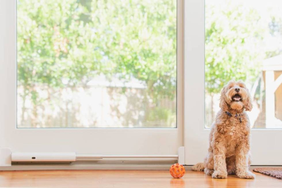 Wayzn converts sliding doors into app-controlled smart doors for dogs. (Courtesy, Wayzn)