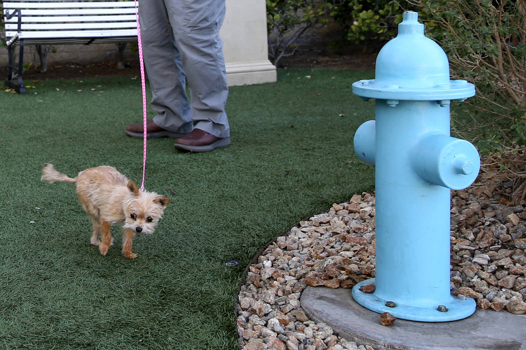 """Tom Woltjen of Chicago with Tulip in the """"Dog Spot"""" at Delano Las Vegas on the Strip ..."""
