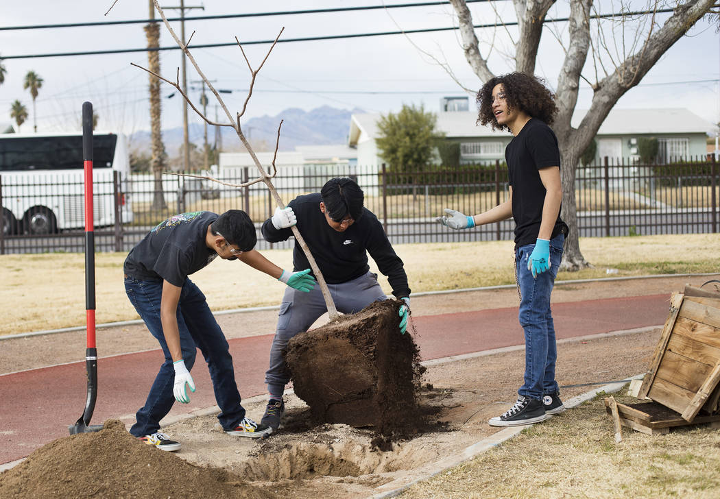 Students Jose Perez, 16, from left, Luis Zamora, 16, and Pedro Flores, 15, plant a tree at Dool ...