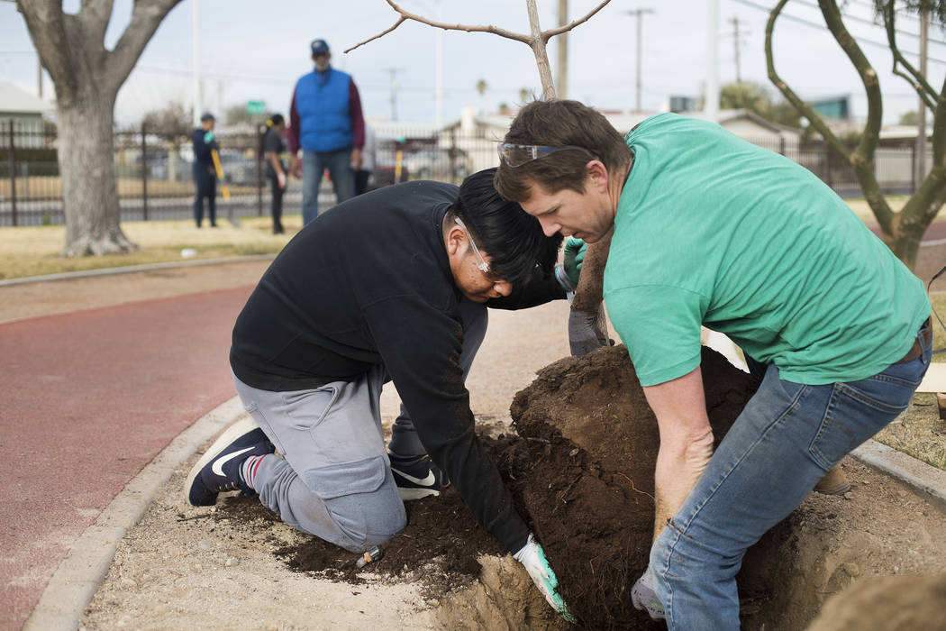 Luis Zamora, 16, gets help from Brad Daseler, the urban forester for the city of Las Vegas, pla ...