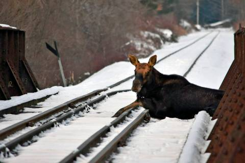 This Wednesday, Jan. 22, 2020 photo provided by the Vermont Fish and Wildlife Department shows ...