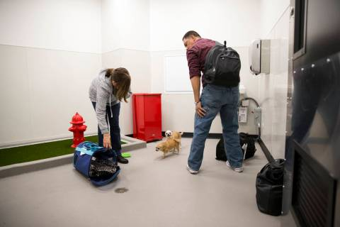Nelva Rasalan, left, and her husband, Joseph, are with their three pet chihuahuas inside the in ...