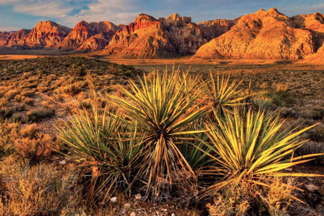 Red Rock Canyon National Conservation Area (Bureau of Land Management via Flickr)