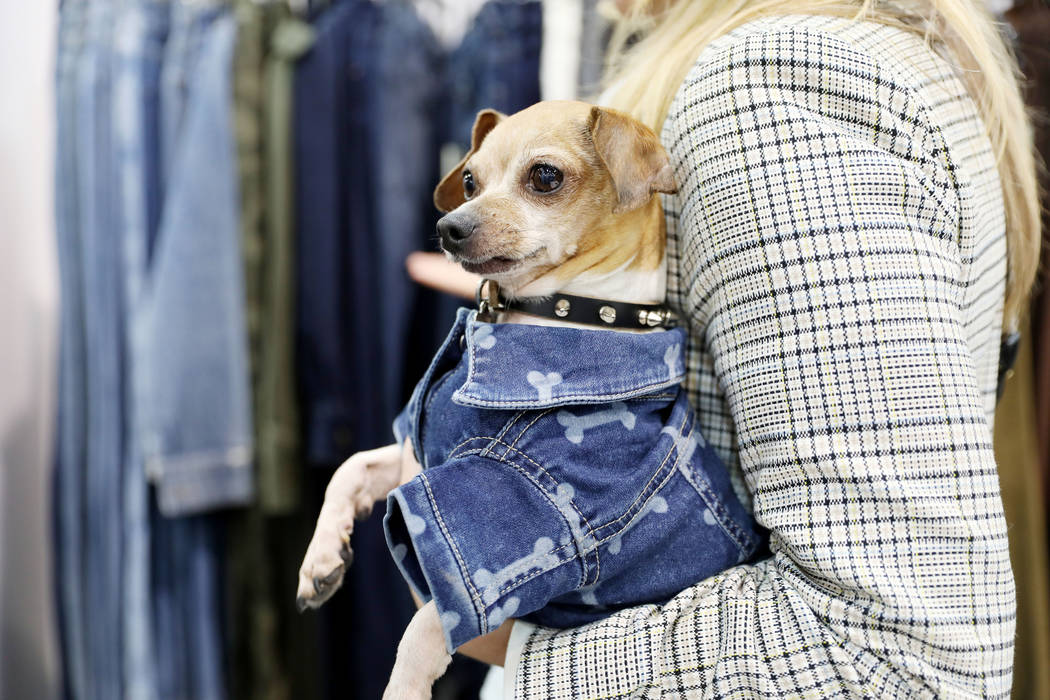 Shorty is wearing the Fido Canine Trucker Polka Pawat, a doggy jean jacket, at DL1961's booth a ...