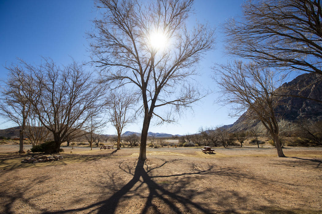 Picnic tables by trees at the former Bonnie Springs Ranch outside of Las Vegas on Friday, Feb. ...