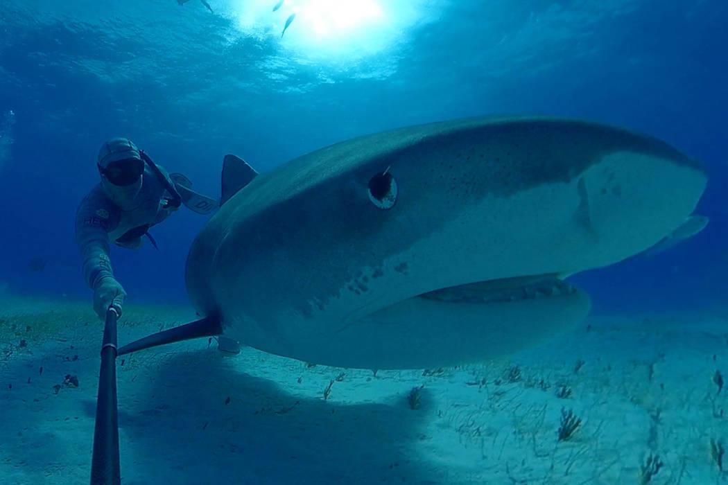 "A still from the upcoming Shark Reef Aquarium virtual-reality film ""Shark Dive."" (Courtesy, ..."