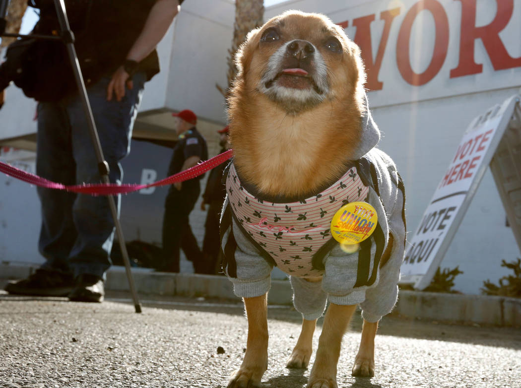 Lucy Khan the dog belongs to Bethany Khan, Culinary Workers Union Local 226 communication dire ...