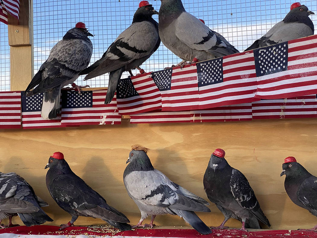 An anonymous group going by the acronym P.U.T.I.N. released birds fitted with Make America Grea ...