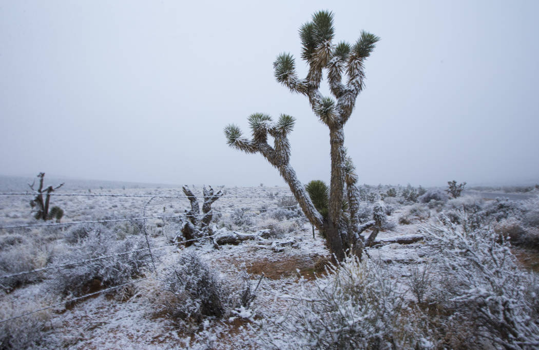Snow falls along state Route 159 around the Red Rock Canyon National Conservation Area outside ...