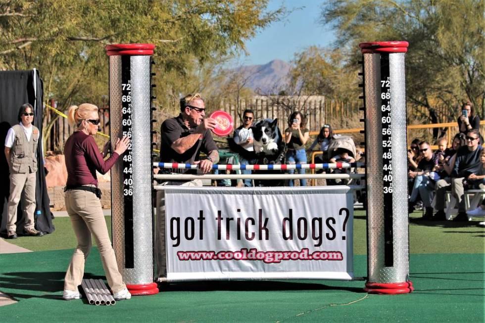 Springs Preserve Jump Dog Show (Springs Preserve)