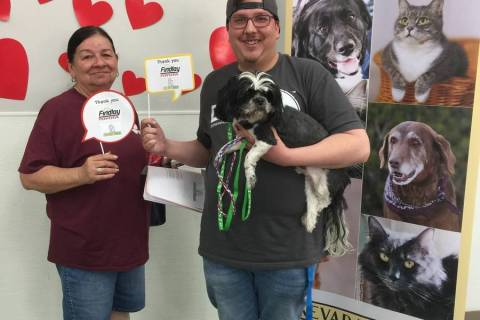Findlay The Nevada SPCA recently teamed with Findlay Toyota to find homes for 47 animals.