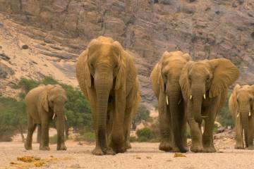 "An elephant leads her family through barren lands in Namibia in a scene from ""Our Planet."" (Jam ..."