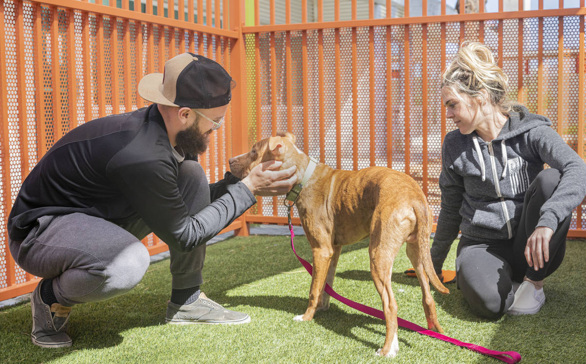 Nick Tomasella, left, and Colleen Finnegan spend time with their potential new dog, Timmy, at T ...