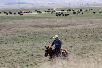 Cattle rancher Joe Whitesell rides his horse in a field near Dufur, Oregon, as he helps a frien ...