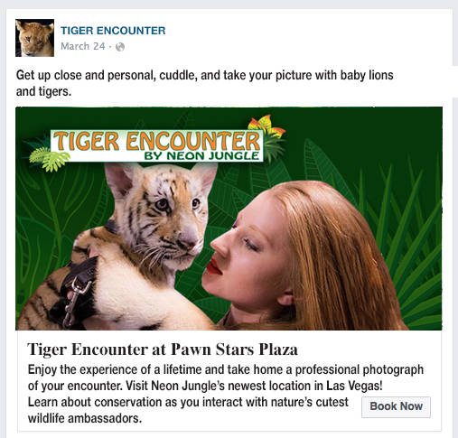 "A mockup of a promotional campaign for ""Tiger Encounter,"" showing Lauren Lowe modeling with a t ..."