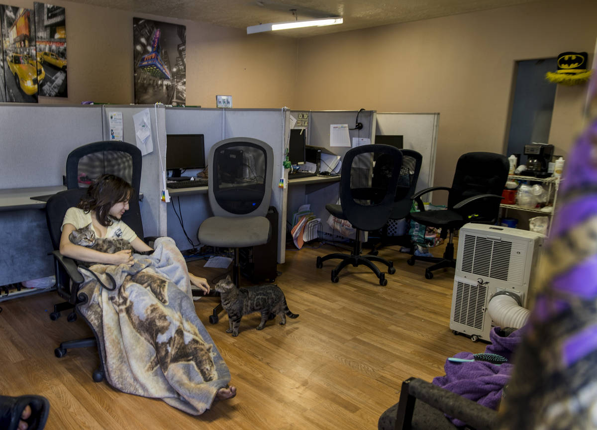 Aubrie Heenan, 17, plays with her cats in a small office space she and her family of five are t ...