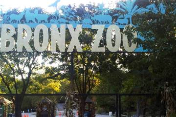 FILE - This Sept. 21, 2012, file photo shows an entrance to the Bronx Zoo in New York. A tiger ...