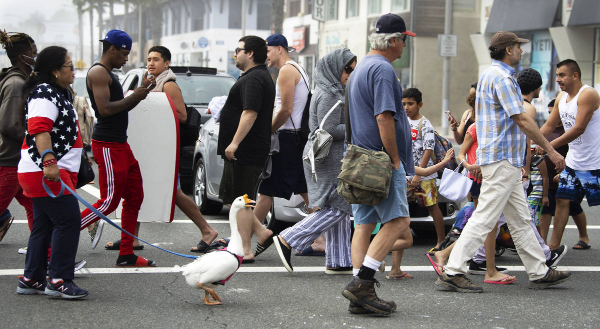 A goose named Goosey crosses the street to get to the other side with owners Psyche Lynch, left ...