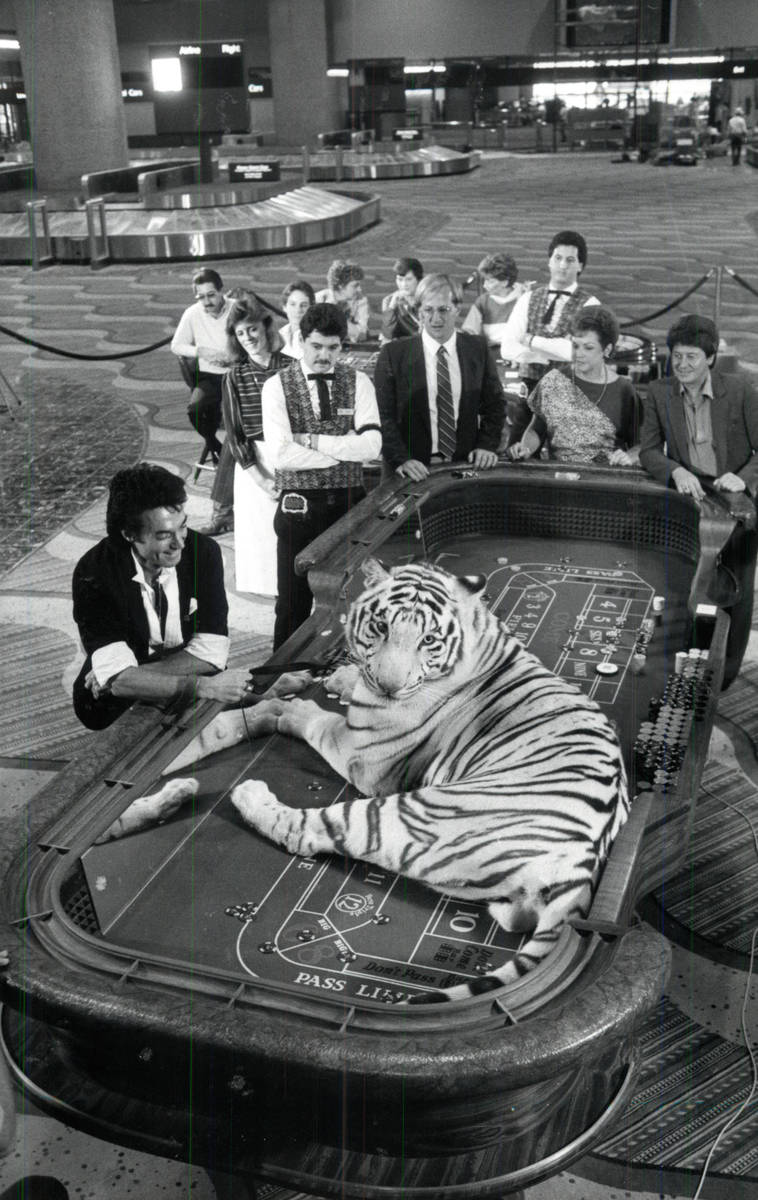 Roy Horn poses with a white tiger on a craps table at McCarran International Airport. (Review-J ...
