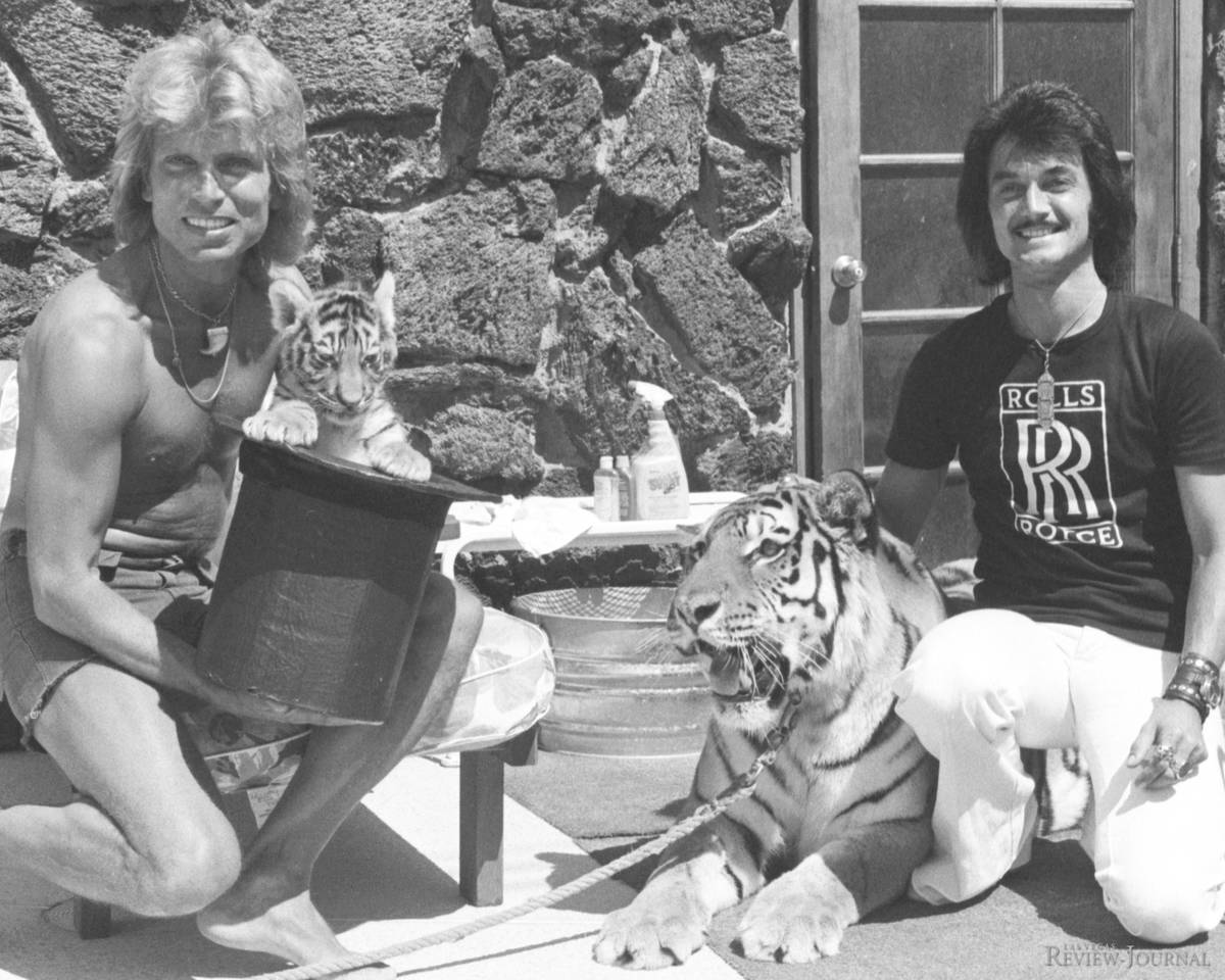 Three-week-old tiger Magic makes his public debut with Siegfried and Roy at their Las Vegas com ...