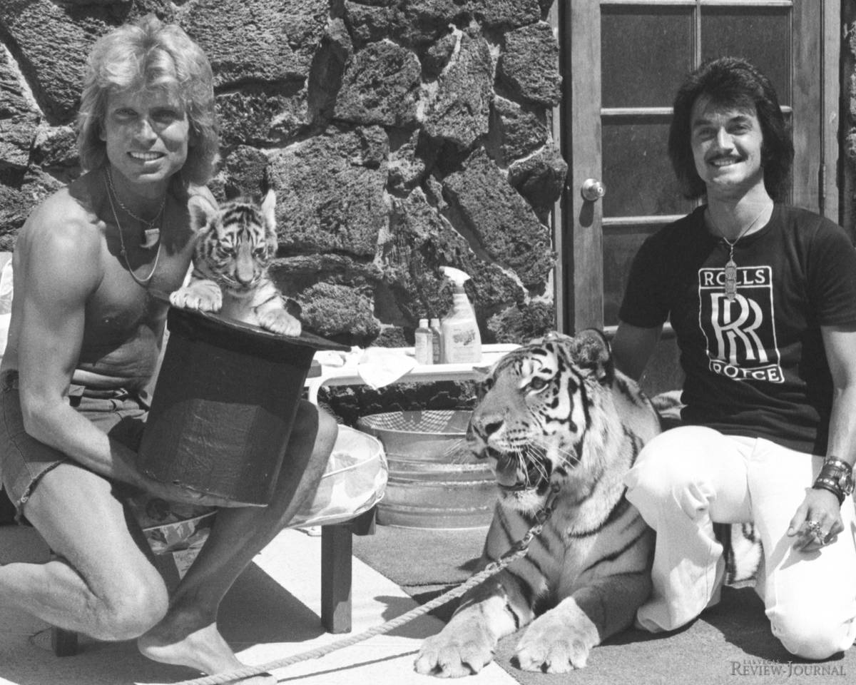 The three weeks old tiger Magic makes a public debut with Siegfried Fischbacher and Roy Uwe Lud ...