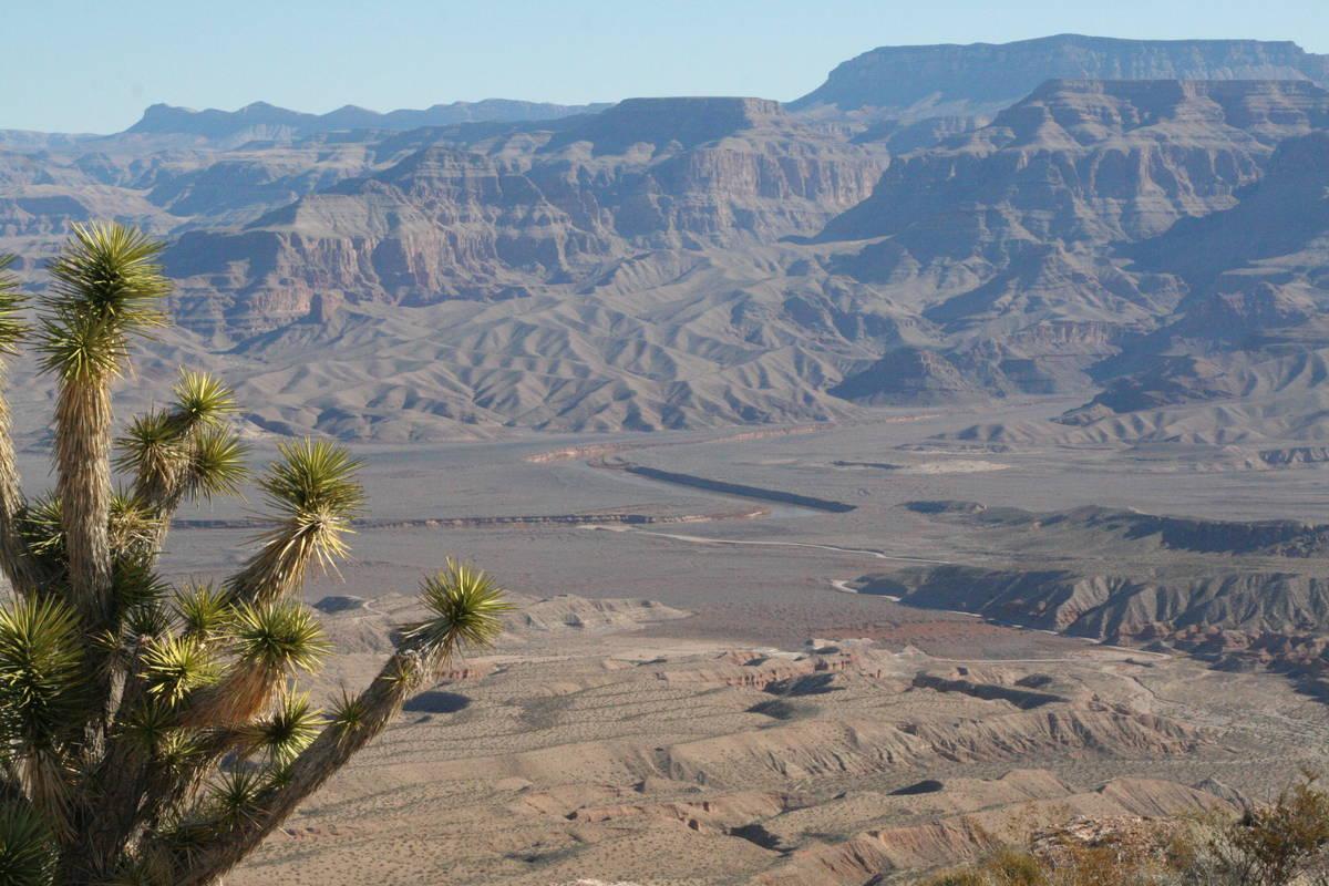 A lone Joshua Tree atop a mesa overlooking the Colorado River near Pearce Ferry, Arizona. (Debo ...