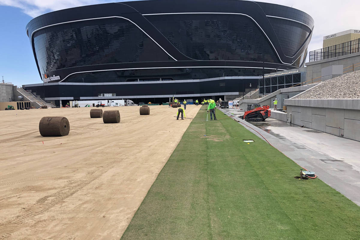 Sod installation began Wednesday on the field tray at the Las Vegas Raiders Allegiant Stadium. ...