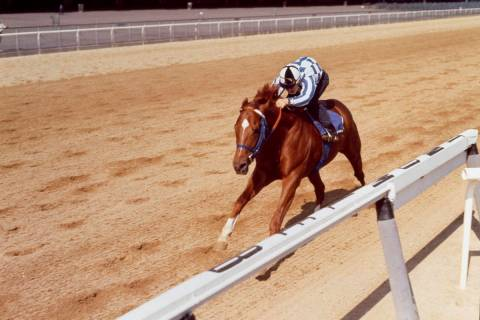 Ron Turcotte rides Secretariat on a practice run for the Belmont Stakes in Elmont, N.Y., June 8 ...