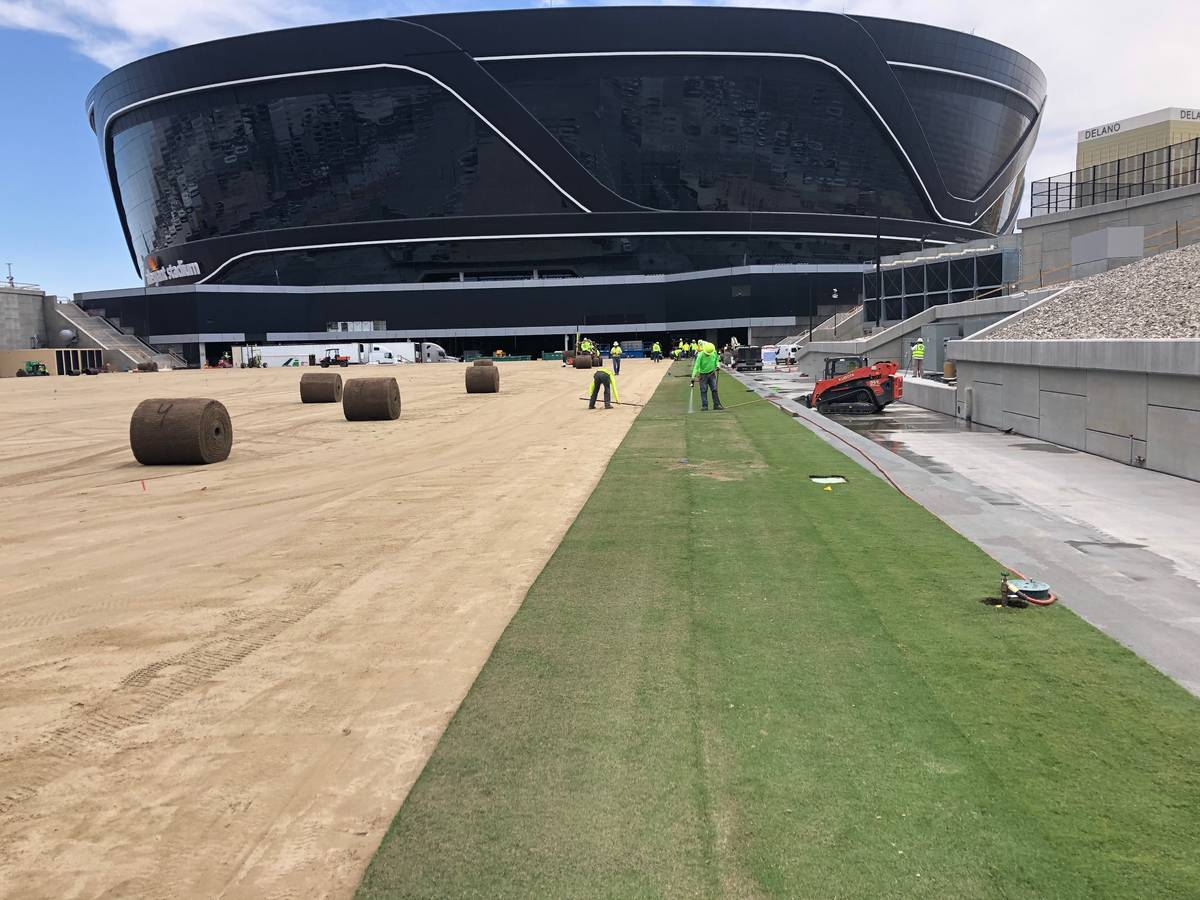 Sod installation began Wednesday, May 13, 2020, on the field tray at the Las Vegas Raiders Alle ...