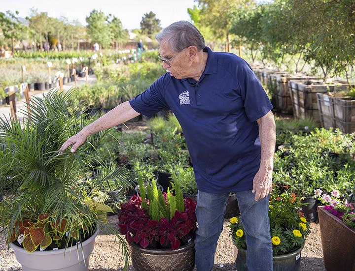 Paul Noe, aka Dr. Q, the resident horticultural expert at Star Nursery, advises novice gardener ...