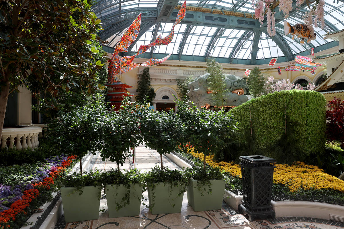 Potted trees are used to direct foot traffic one way in the Bellagio Conservator during a media ...