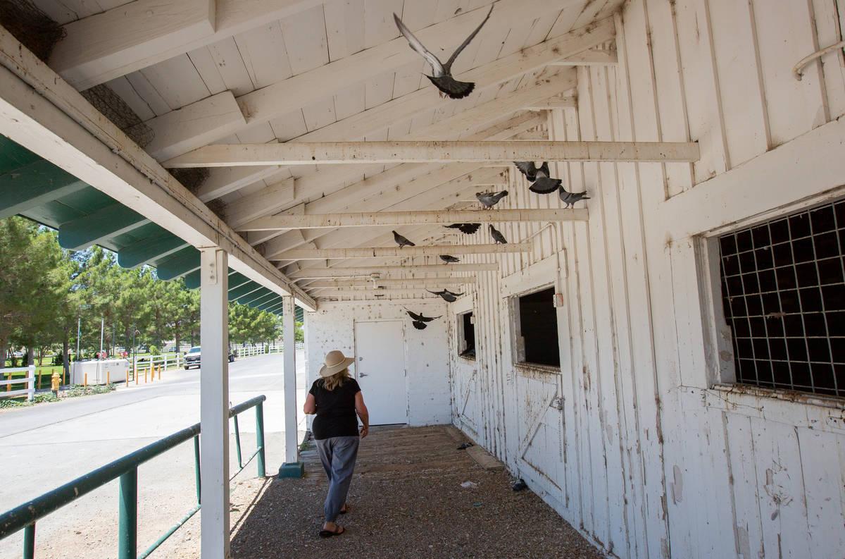 Karen Livingston, leader of the Save Floyd Lamb Park action group, looks into barns at Floyd La ...