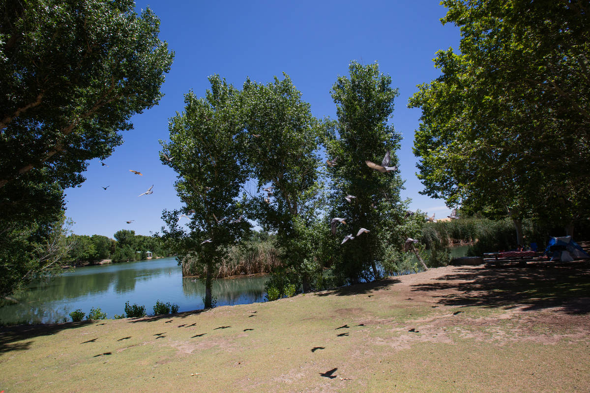 Birds fly over one of the lakes in Floyd Lamb Park in Las Vegas on Friday, June 19, 2020. (Chri ...