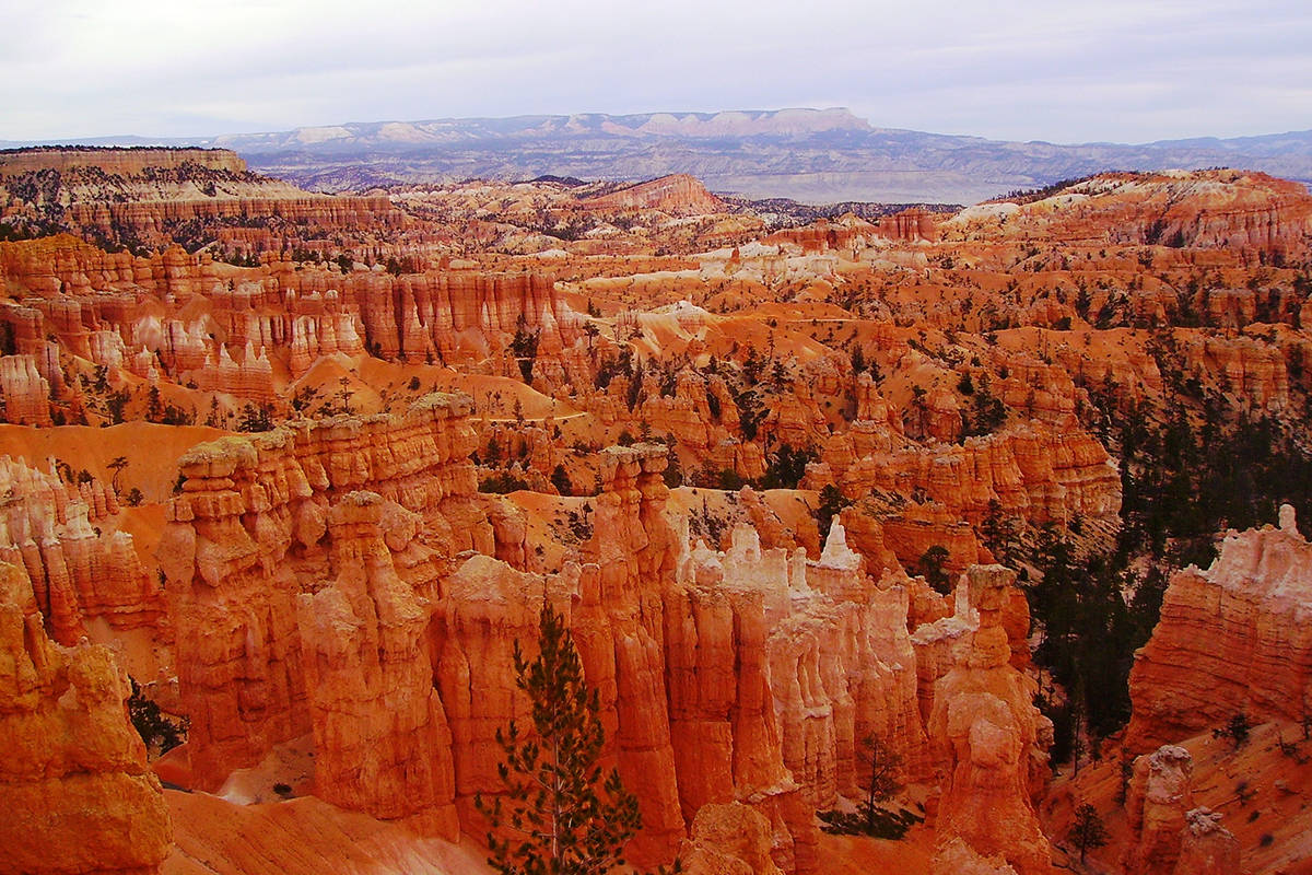 The 35,835-acre park, established in 1928, lies on the eastern rim of the Paunsaugunt Plateau i ...