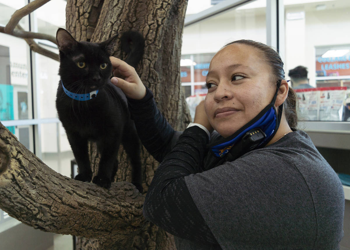 Brenda Arceo, adoptions manager at The Animal Foundation petting Boris, the black cat, availabl ...