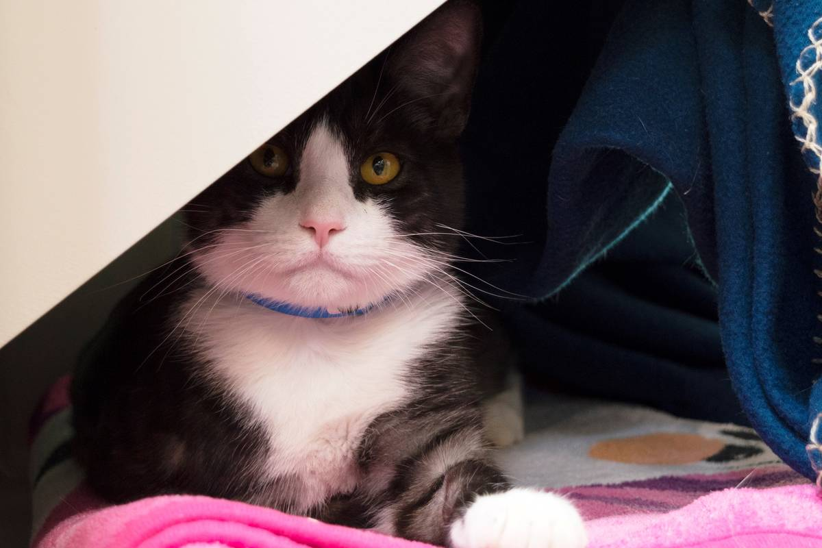 Scott remains curious yet unbothered on his comfy pink blanket at The Animal Foundation. Las Ve ...