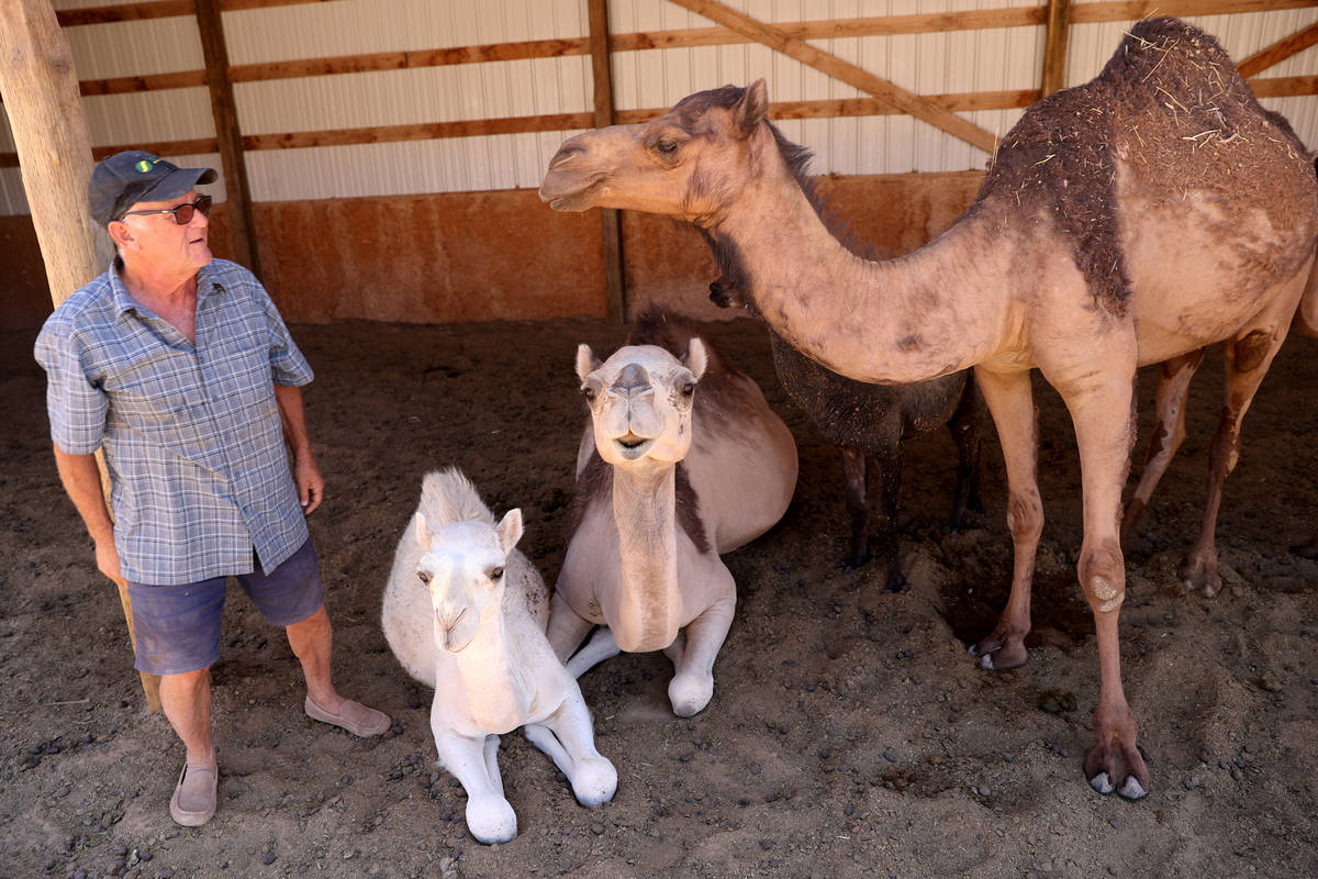 Guy Seeklus visits with, from left, Sam, 5 months, her mother Dorothy, and Bessie at Camel Safa ...