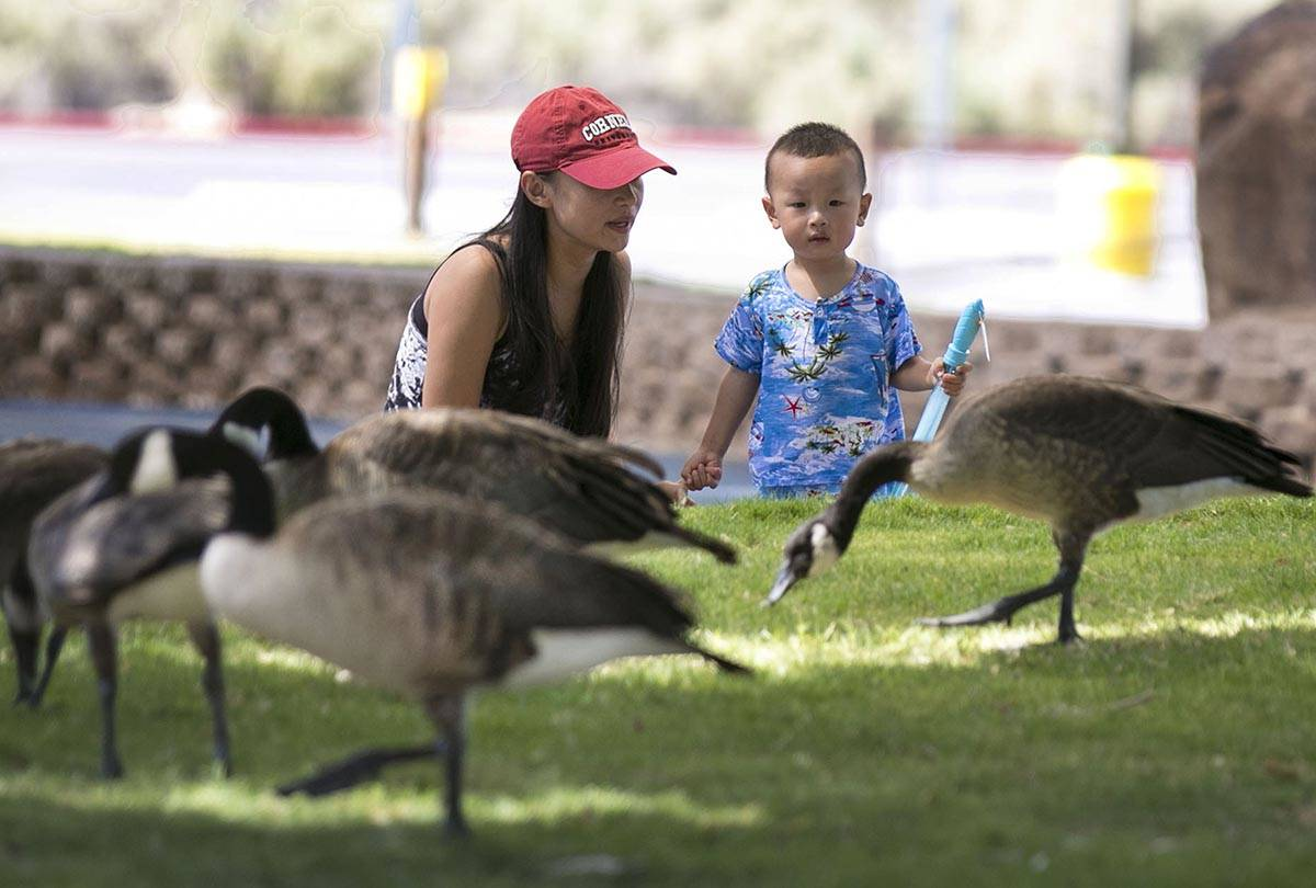 Darren Li, 2, and his mother Eva watch as a flock of geese walk past them at Sunset Park on Wed ...